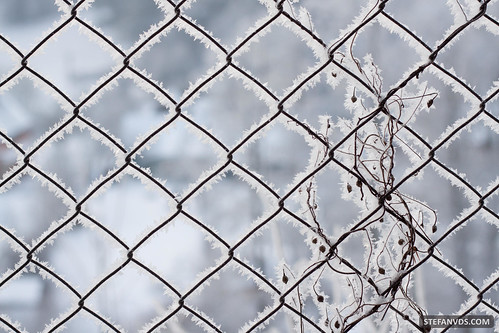 Ice Fence   by Stefanvds(.com)