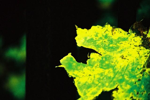 Contrast leaf