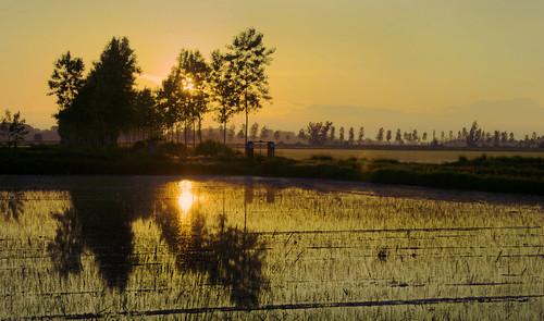 """panorama canon tramonto natura campagna sole acqua reflexions colori luce paesaggio ohhh riso lomellina riflesso risaie sfumature piccolini """"flickraward claudio61"""