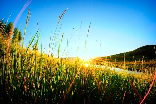 sun field sunrise colorado warm fisheye starburst nikon105mmf28 niksoftware crookedcreekranch andrewvernon coloreffectspro nikond300s aperture3