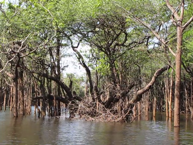 Canoeing on the Rio Urubu