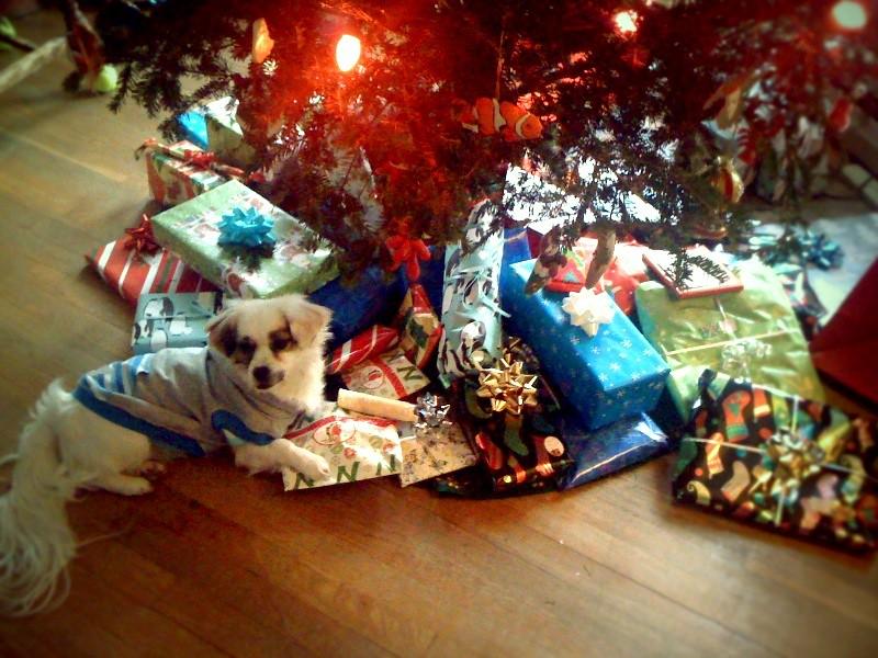 azure likes the tree