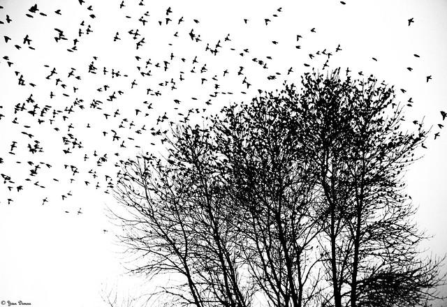 L'arbre qui se décompose les jours de pluie