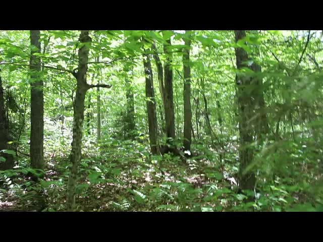441 Video of Bushwhacking west from Balsam Cap to Rocky Mountain - flat area at the Col