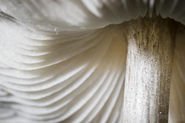 Gills - Dessous de plutée