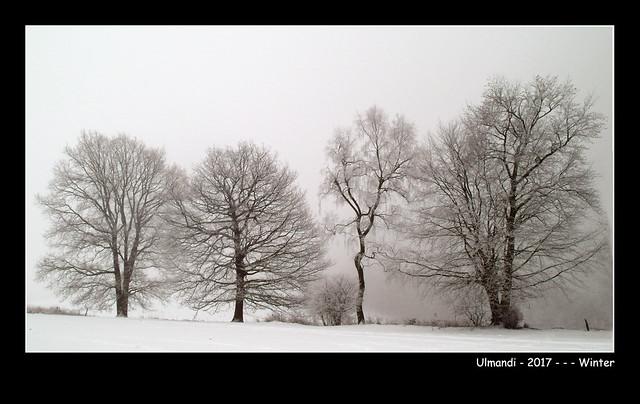 Ulmandi - 2017 - Winter