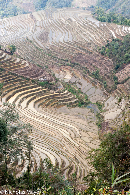 A Valley Of Flooded Terraces