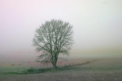 autumn trees mist fog rural landscape nebel scenic northcarolina fields multitemporal
