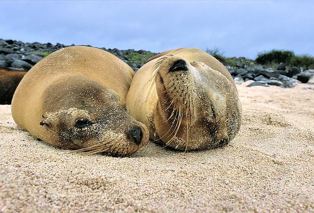 Galapagos, too tired