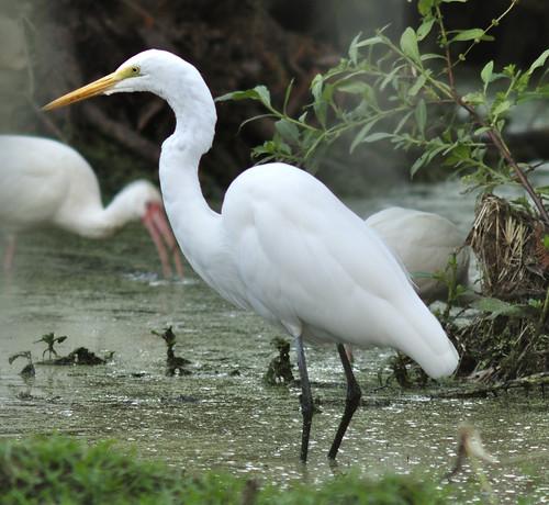 bird florida wildlife