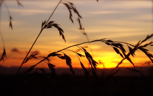 sunset newzealand orange macro grass silhouette closeup focus east gisborne