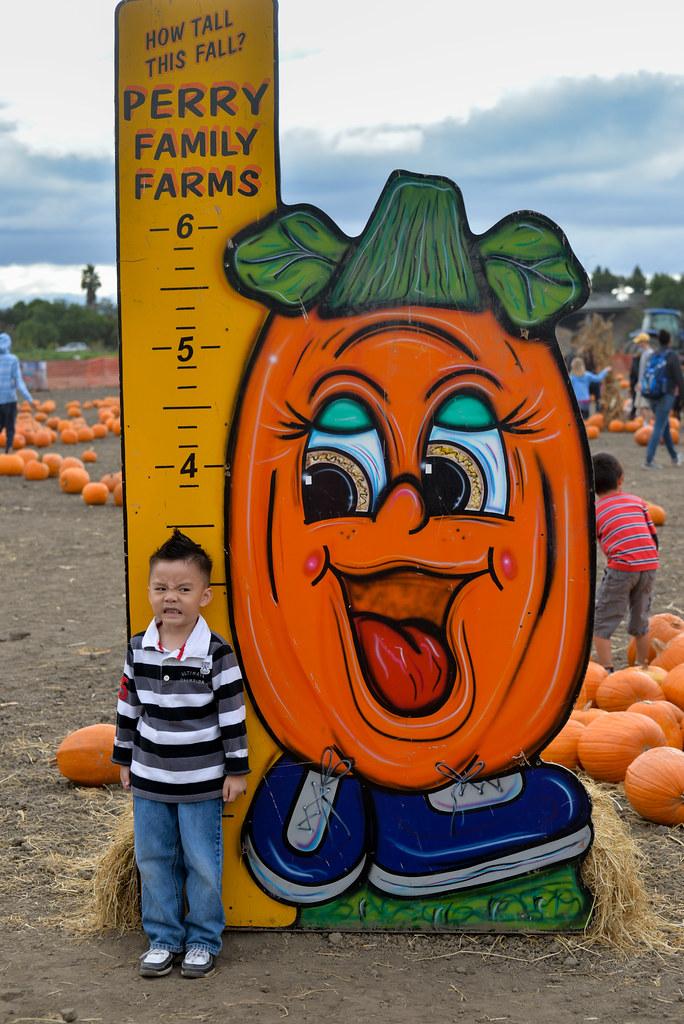 ardenwood pumpkin patch fremont