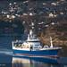 Fishing vessels & Well boats