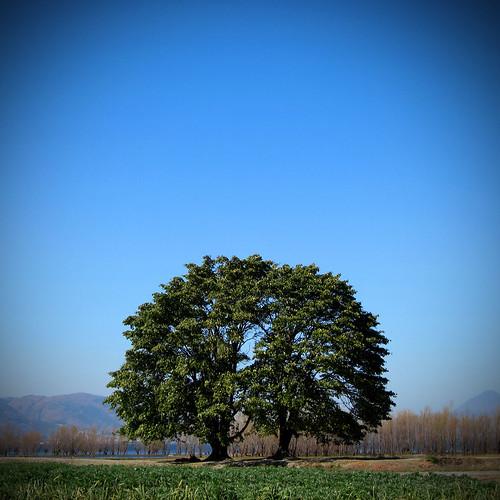 double tree | by Kelly Hau Photography