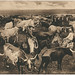 Texas Long Horns by SMU Libraries Digital Collections