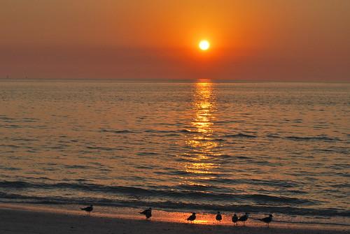ocean sunset sea sun beach saint st gulf florida seagull gull pass petersburg explore grille explored a mygearandme mygearandmepremium mygearandmebronze mygearandmesilver allnaturesparadise