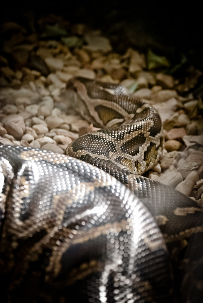 Python | At the National Zoo in Washington, DC  | Will and