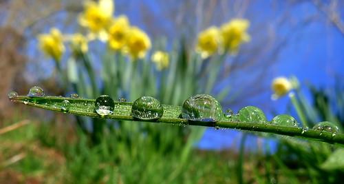 frühlingswiese flickrdiamond