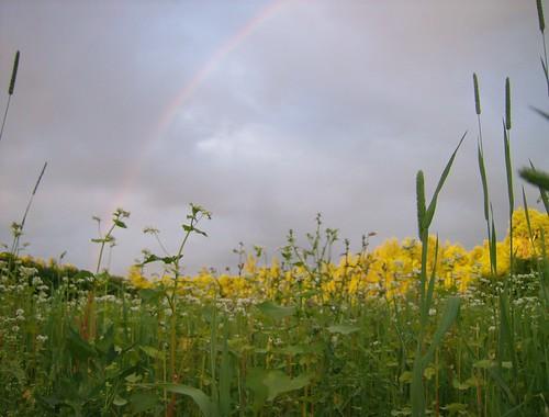 trees sunset sun flower tree wet field grass rain clouds spring rainbow bow flowering