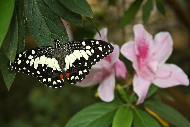 Butterfly Farm, Cameron Highlands, Malaysia