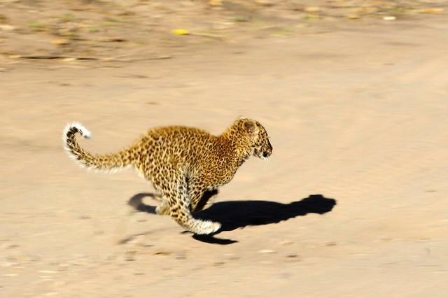 Botswana Chobe _D7C9210