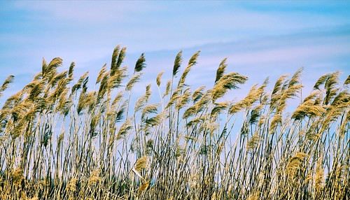 grass bluesky breezy sigma70300mm