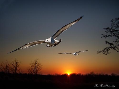 sunset birds canon kodak goinghome