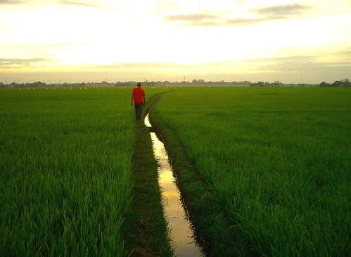 sunset reflection green rice pentax philippines sanjose ricefields pinoy tarlac definitive wowphilippines teampilipinas canonites 100commentgroup mygearandme mygearandmepremium depinitibo