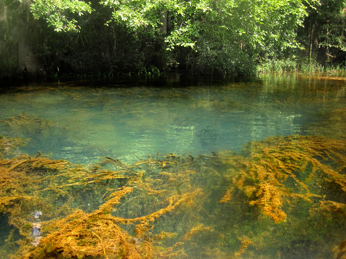 water spring florida clear springs