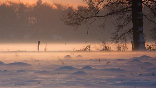 winter sunset sky sun snow tree canon landscape belgium dusk snowy belgië filter dew bruno flanders flandersfields cokin vlaanderen 450d misseeuw brunomisseeuw