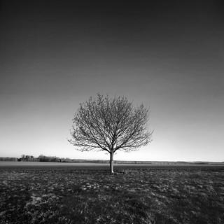 lone tree | by Richard:Fraser