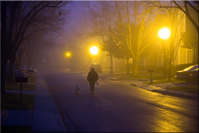 Walking the Dog in the Fog
