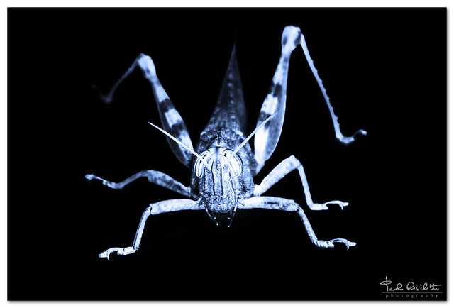 X-Ray of an insect