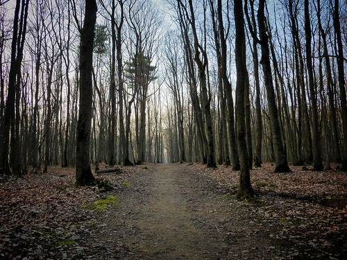 Le bois des carrés | by CpaKmoi