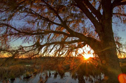 sunset florida glenwood oaktree deland volusiacounty sunflares lakewoodruffnwr