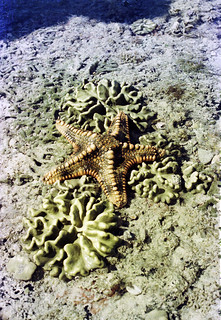 Mount Blaze Starfish - 1978