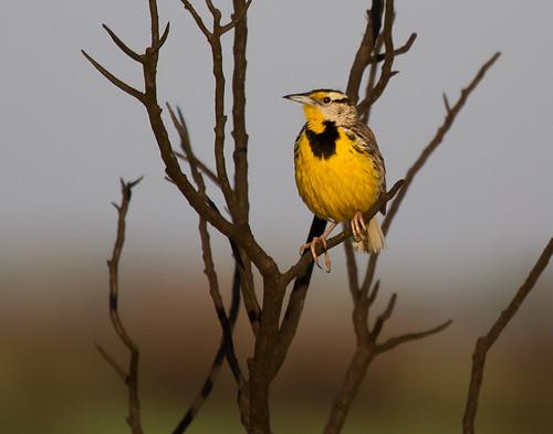 nature birds texas nwr surfside brazorianationalwildliferefuge gseloff dailynaturetnc11
