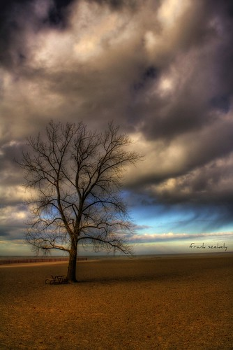 winter ohio tree beach sand headlands hdr mentor