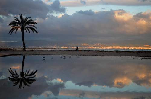 travel winter sea sky cloud colour reflection tree silhouette sunrise landscape bay spring spain nikon gull traveling dslr mallorca palma majorca explored balearicisland platjadepalma badiadepalma nikon1855mmf3556gafsdxvr d3100 nikond3100 pallabseth