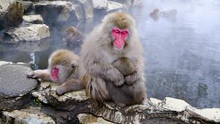 Hakuba and Nagano in Japan (15 of 34) | by TomEats