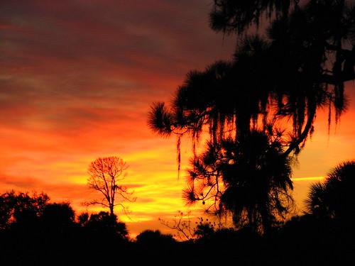 sunset silhouette canon florida elite fl powershots3is heartawards 100commentgroup flutterbye216