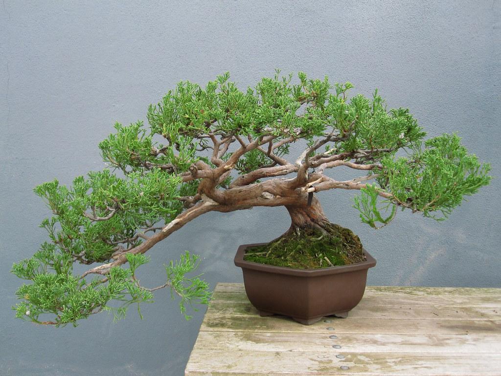 Fine Bonsai Styles Brooklyn Botanic Garden Wiring Cloud Hisonuggs Outletorg