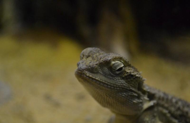 Reptile Wonder