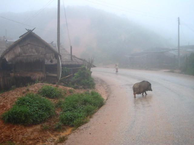 thailandeinde1 267 (1)