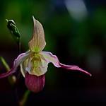 flower 1067