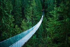 Capilano Suspension Bridge by michellerlee