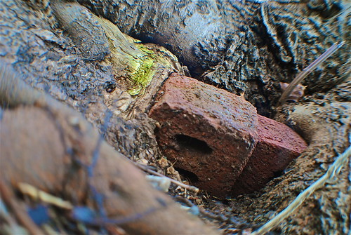 tree brick connecticut milford enveloping
