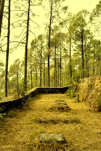 pink flowers tree yellow pine forest spring solitude peace silent random graves apricot breeze afternoons tattered ranikhet apricottree uttarakhand parsicemetery chinaviewranikhet
