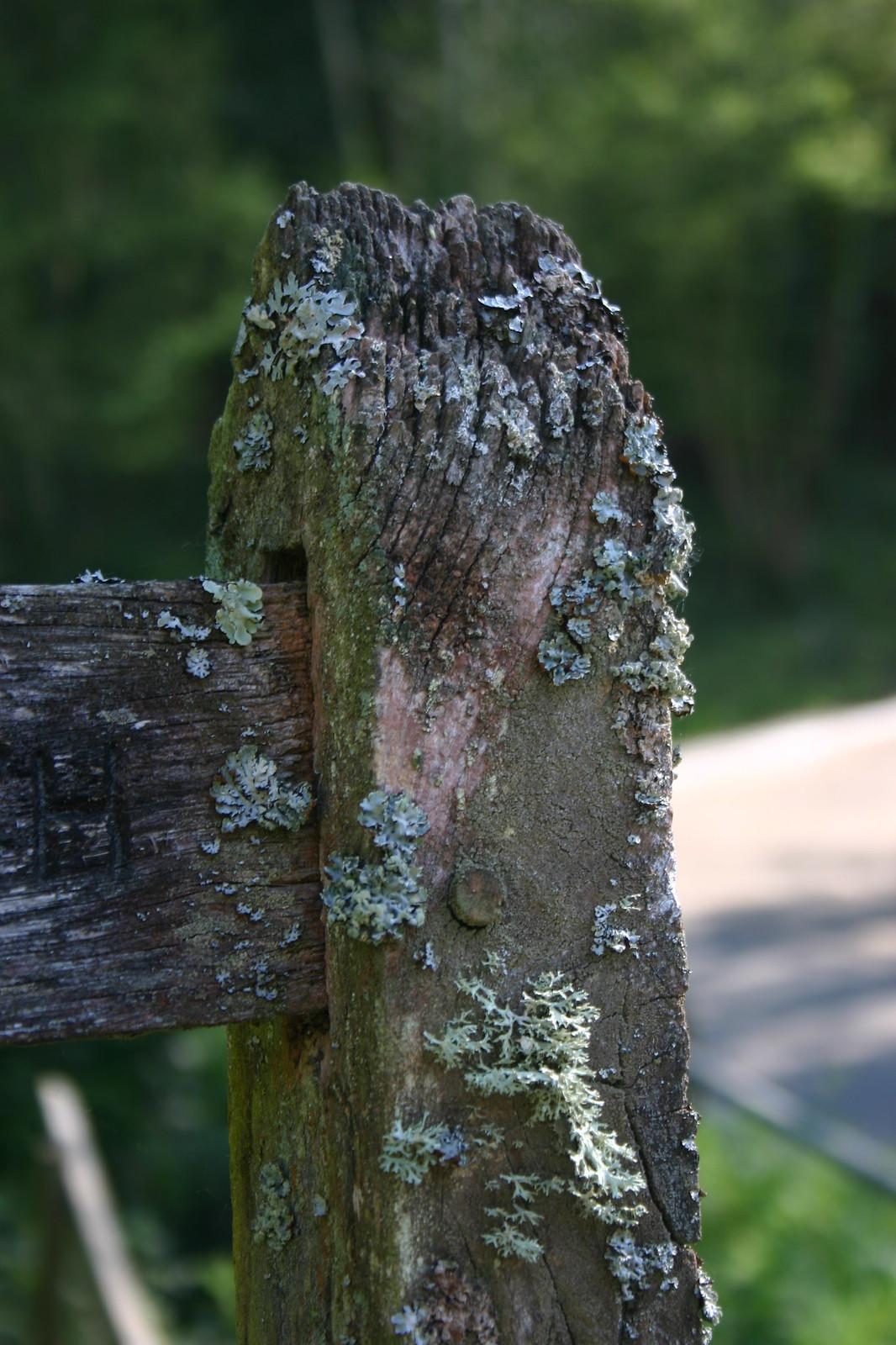 Licheny post