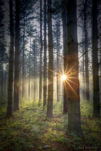 morning sunlight mist nature fog pine forest landscape outdoors dawn filtered oakopeningspreserve